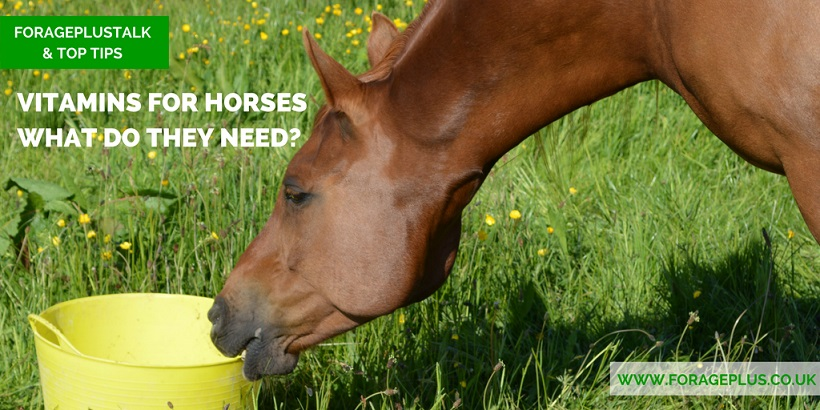 This article with explain what to consider when supplementing your horse's diet with vitamins