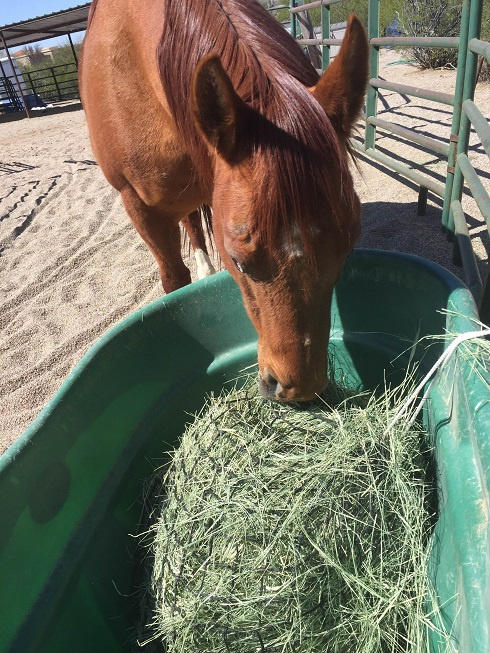 You can provide a constant gut fill for your horse by using hay nets, or multiple small feedings per day