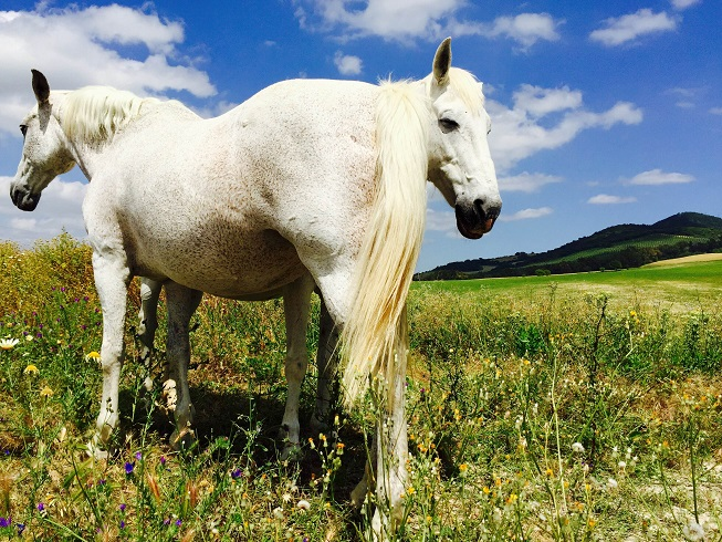 Natural Boarding systems reason from how horses live in nature