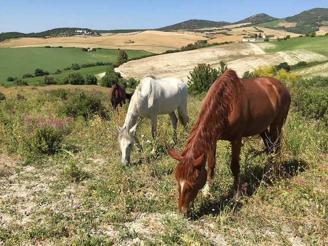 It domestic settings horses are often fed three large meals in contrast to their natural setting where feed is continuously available